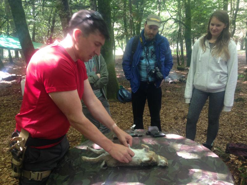 butchering-rabbit-carcass